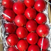Fresh Fruit Pomegranate