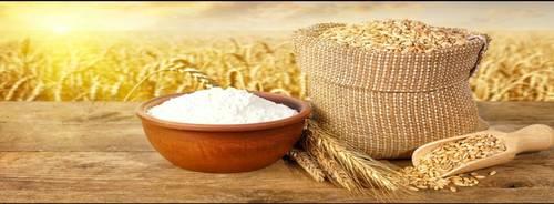 밀 단백질