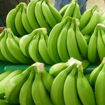Green Fresh Cavendish Banana