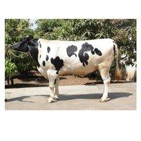 Pure Hf Bull