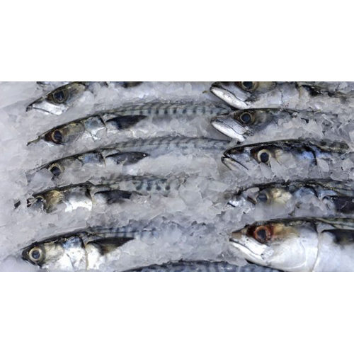 Fish And Seafood Glossary