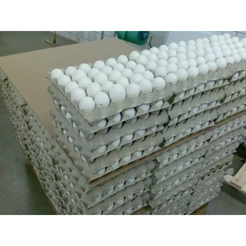 Fresh Chicken White Eggs