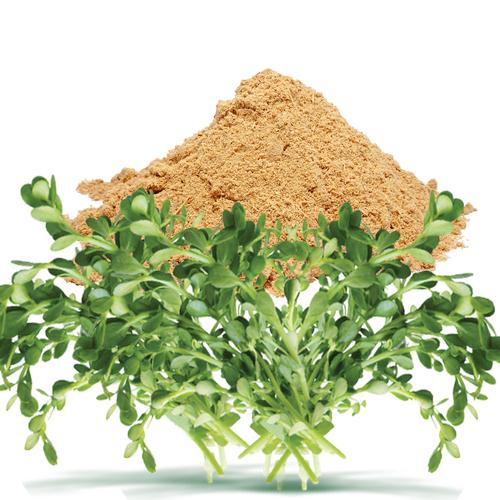 Bacopa Monnieri Dry Extract