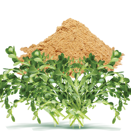 Bacopa Monnieri Dry Extract /Brahmi extract