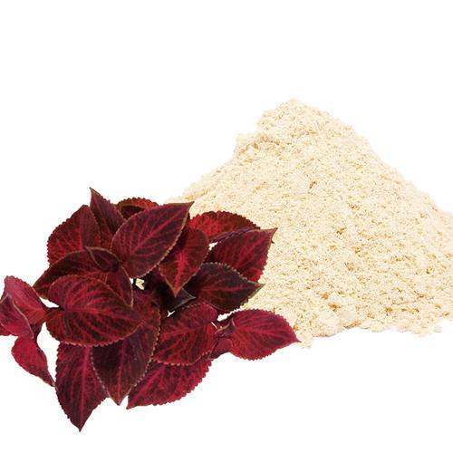 Coleus Dry Extract