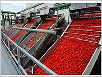 Fruits and Vegetables Processing Plants