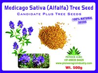 Alfalfa Seeds Medicago Sativa / Luceme Grass Seeds Kuthiraimasal Grass Seeds