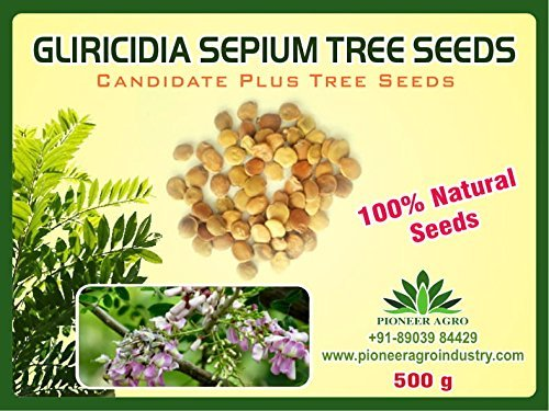 Gliricidia Sepium Tree Seeds 500g