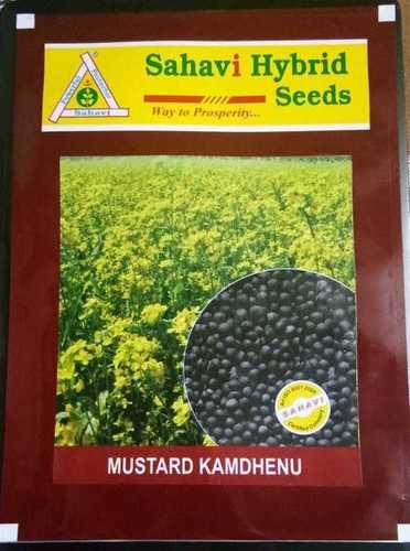 Mustard Kamdhenu seeds