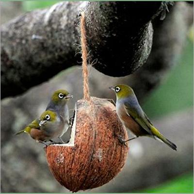 L Cutting Bird feeder with birds