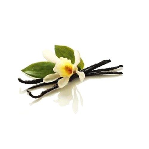Vanilla Oil 3% Dilution in Jojoba Oil