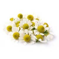 Chamomile German 3% Dilution in Jojoba Oil