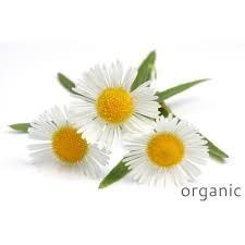 Certified Organic Chamomile German Essential Oil