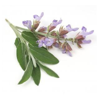 Organic Clary Sage Essential Oil