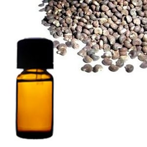Ambrette Seed Floral Absolute Oil