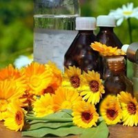 Calendula Floral Absolute Oil