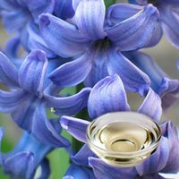 Hyacinth Floral Absolute Oil