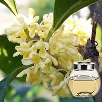 Osmanthus Floral Absolute Oil
