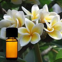 White Champaca Floral absolute Oil