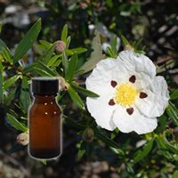 Labdanum Essential Oil