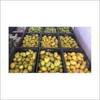 Mango Ripening Plant