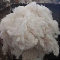 Giza Cotton