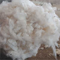 Giza 94 Raw Cotton