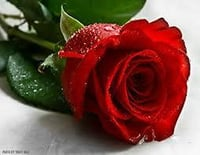 Artificial Red Rose