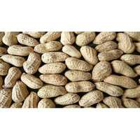 Fresh Groundnuts seeds