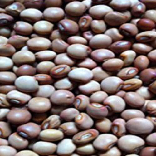 Pigeon Beans