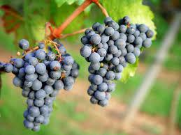 Grape berry flavor