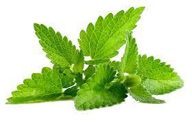 Green mint flavor