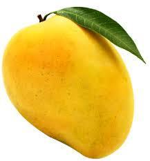 Mango Alphonso flavor