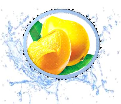 Mango Sweet flavor
