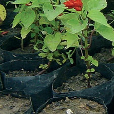 Seedling Bags