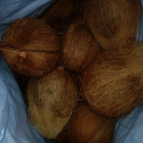 Fresh Water Coconut