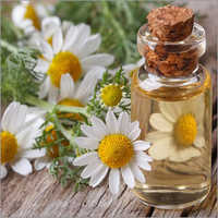 Chamomile Essential Oil Roman