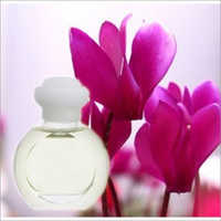 Cyclamen Essential Oil