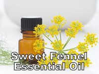 Fennel Essential Oil Sweet