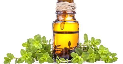 Marjoram Essential Oil Sweet