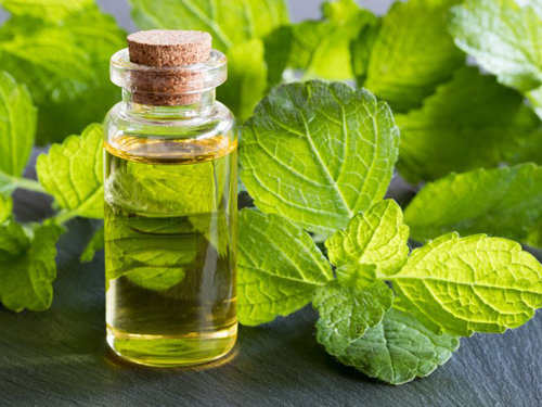 Melissa Leaf Essential Oil