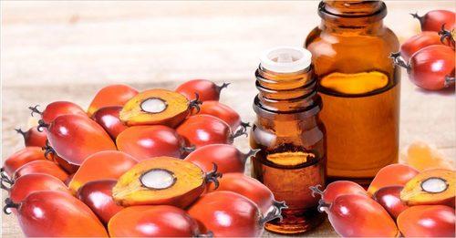 Palm Kernel Carrier Oil