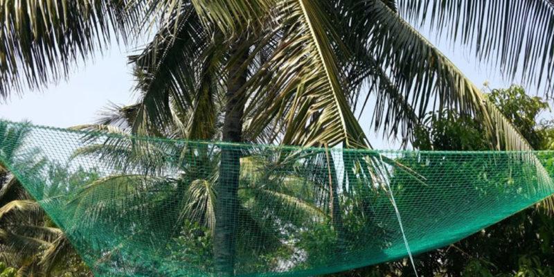 coconut safety net