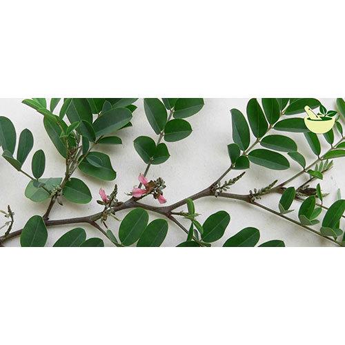 Avari Leaves