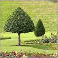Garden Development Services