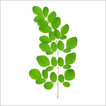 Moringa Leaves