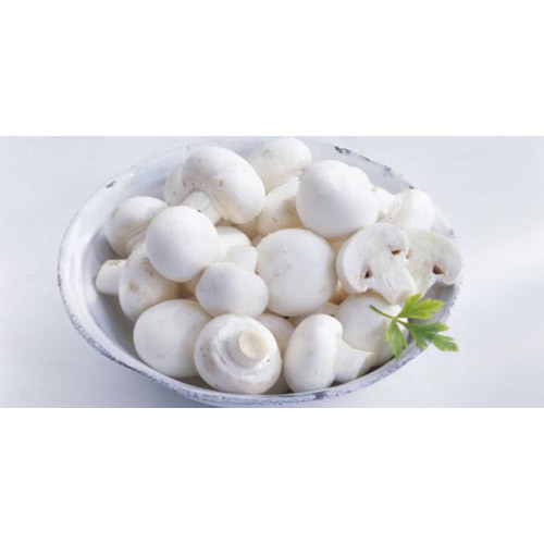 Milky Mushroom