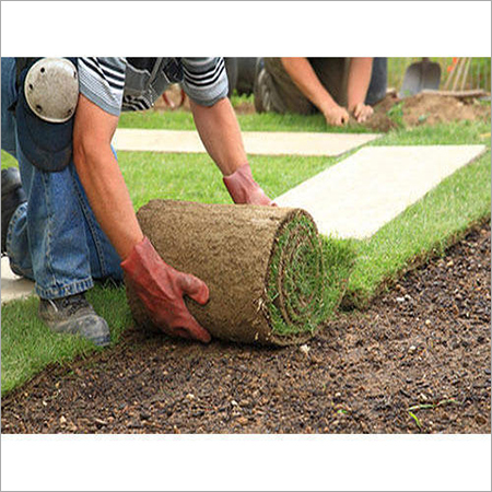 Landscaping Servcies