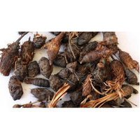 Cyperus Rotundus Root Powder