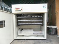 Chicken Egg Hatchery